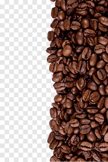 Mountain, Coffee, Green Coffee, Coffee Bean, Green Coffee.