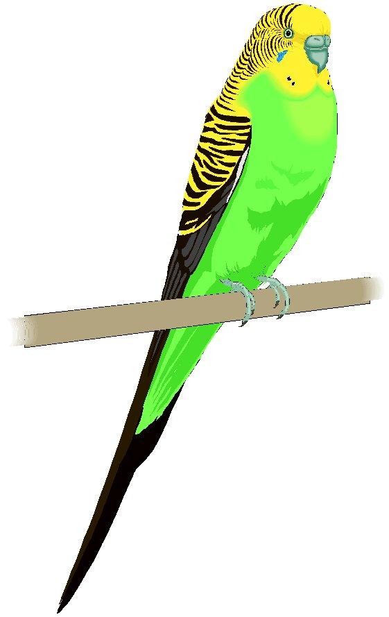 Parakeet cliparts.