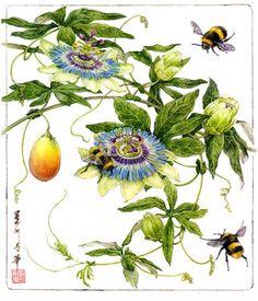 antique botanical print passion flower illustration DIGITAL.