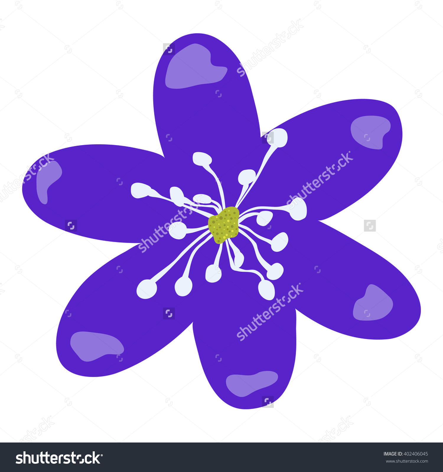 """Hand Drawn And Isolated """"Hepatica"""" Flower (Or Liverleaf, Liverwort."""
