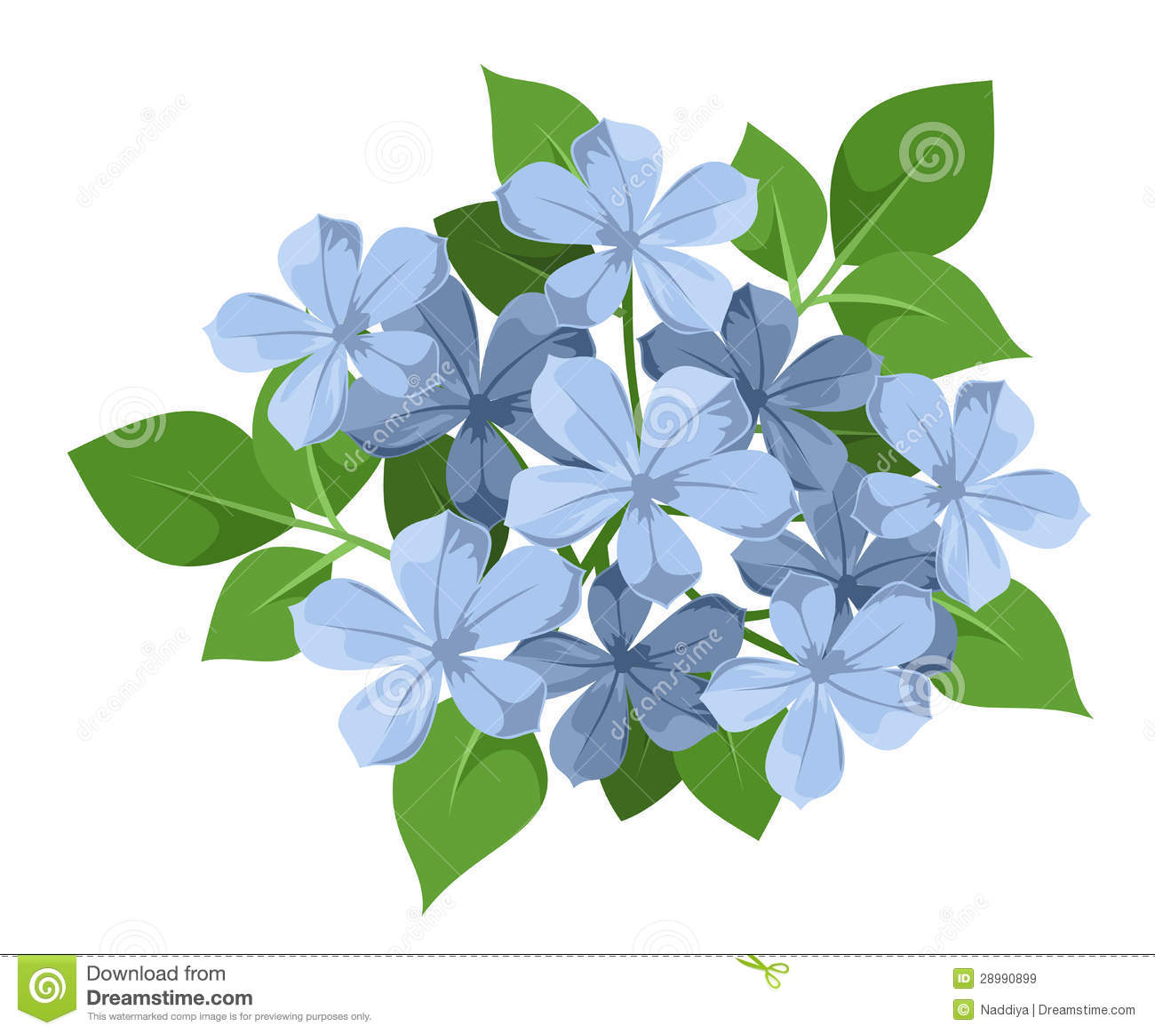 Blue Plumbago Flowers. Royalty Free Stock Images.