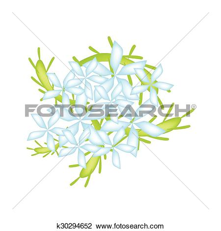 Clipart of Blue Cape Leadwort Flower or Blue Plumbago Flower.