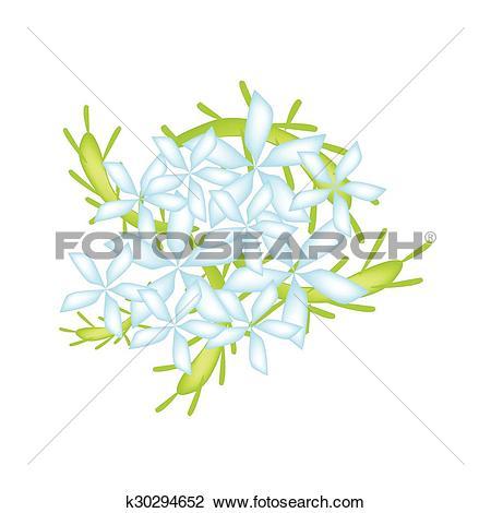 Clipart of Blue Cape Leadwort Flower or Blue Plumbago Flower.