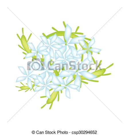 Clipart Vector of Blue Cape Leadwort Flower or Blue Plumbago.