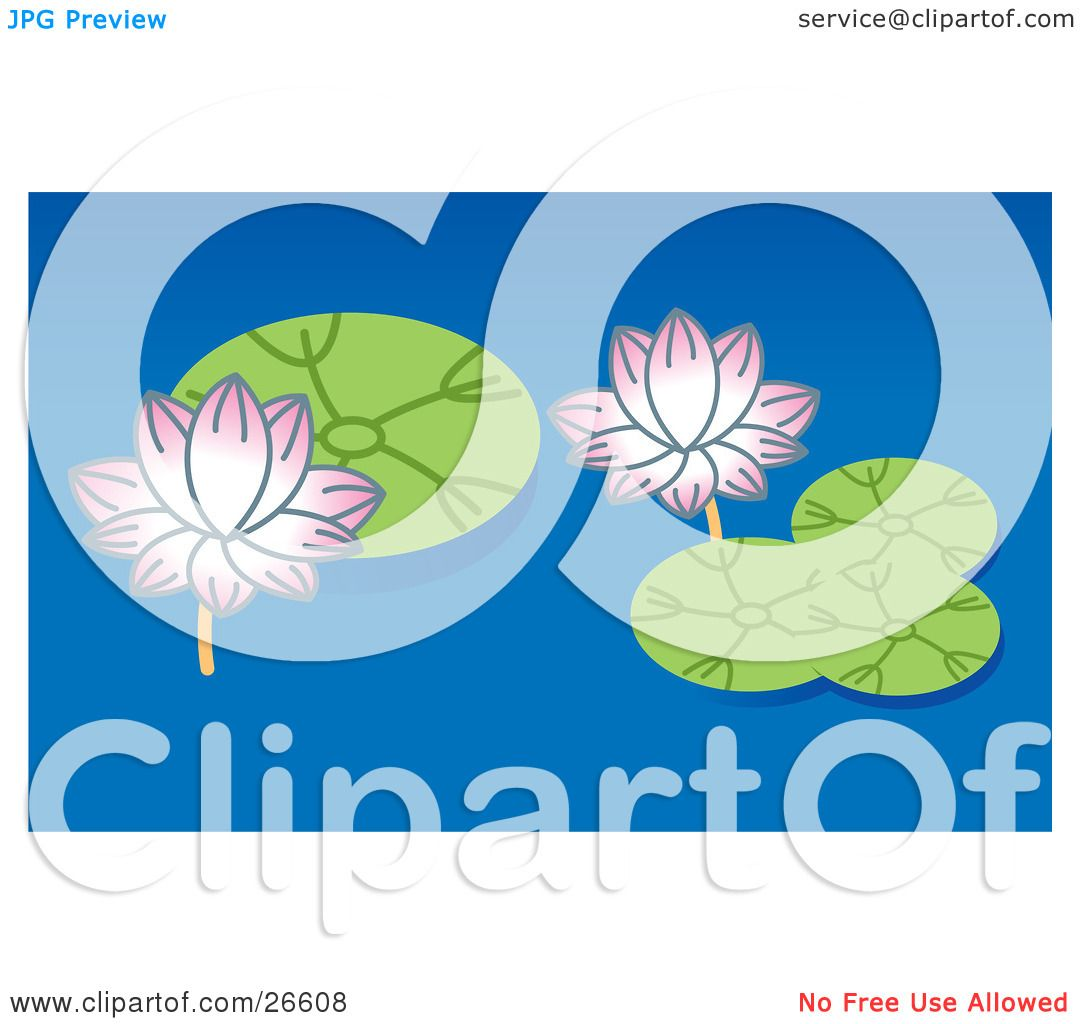 Clipart Illustration of Two Pink Lotus Flowers And Green Lilypads.