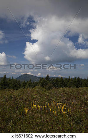 Stock Photo of Meadow, Blue Ridge Parkway, Pisgah NF x15671602.