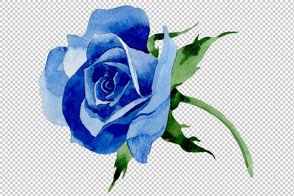 Wildflower blue rose PNG watercolor.