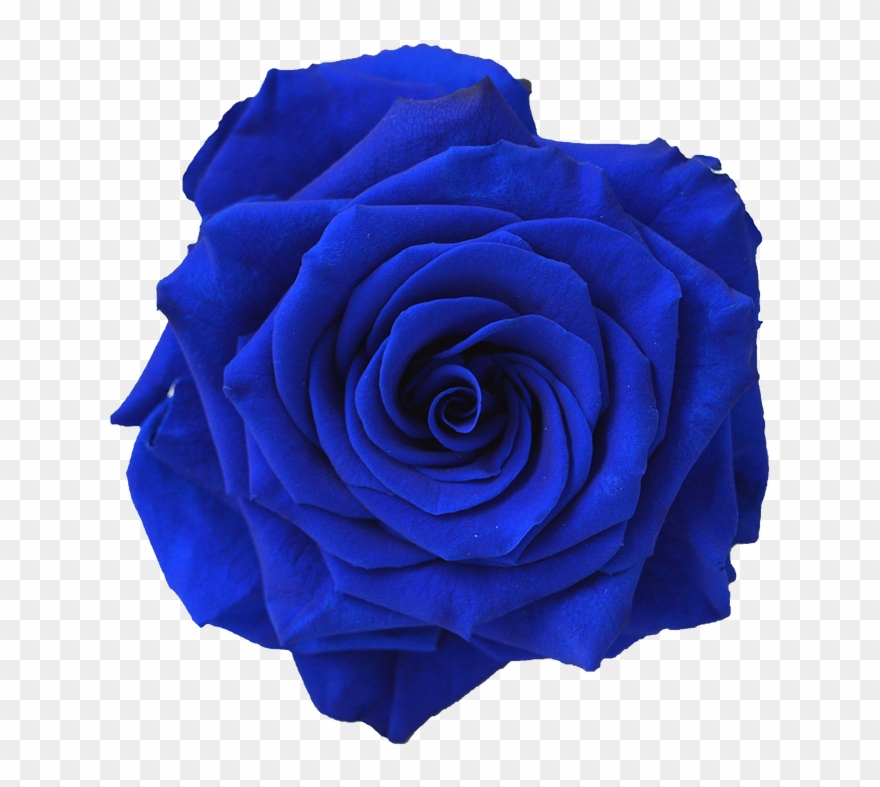 Kisspng Blue Rose Flower Navy Blue Clip Art Blue Flower.