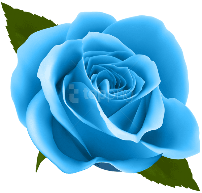 Blue Roses Png, png collections at sccpre.cat.