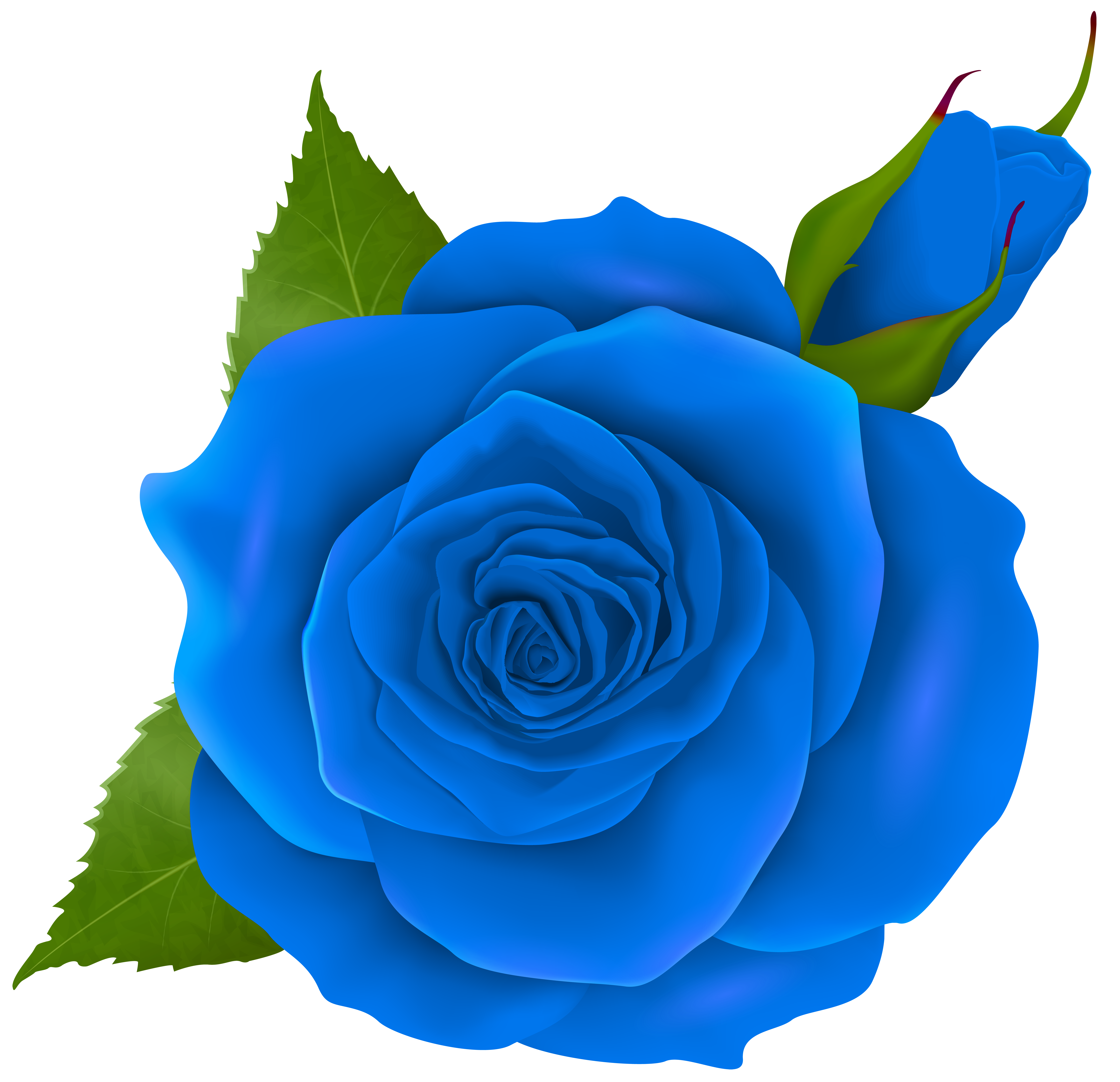 Blue Rose and Bud Transparent PNG Clip Art.