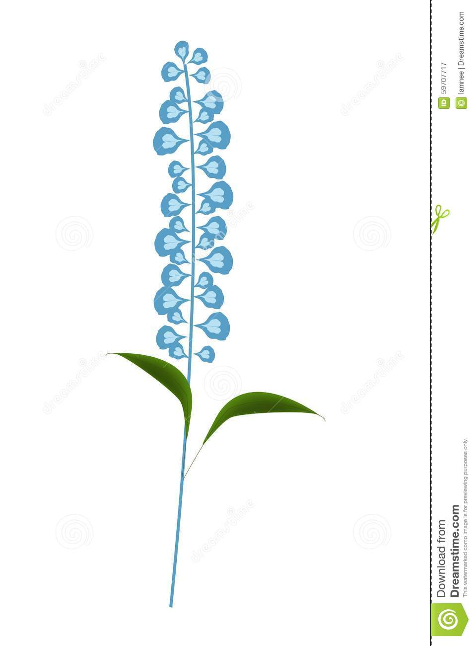 Blue Sage Flowers Or Salvia Officinalis Flower Stock Vector.