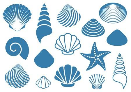45,212 Sea Shell Stock Illustrations, Cliparts And Royalty Free Sea.