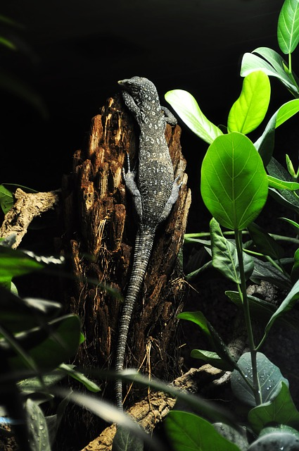 Free pictures REPTILE.