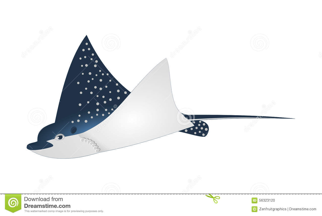 Blue Spotted Stingray Stock Photos, Images, & Pictures.
