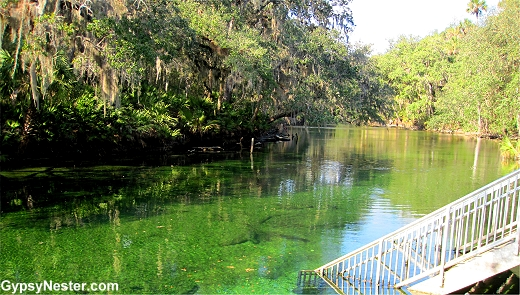 It's Florida Manatee Time: How to See the Gentle Giants.