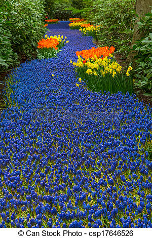Stock Photo of blue river of muscari flowers.