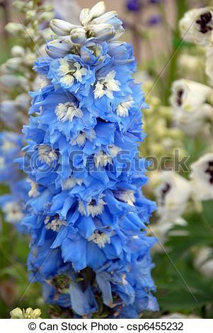 Stock Photo of Blue stalk Flower.