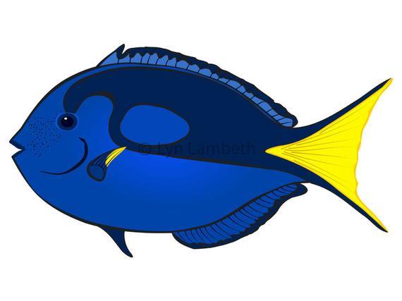 Blue tang clipart, instant download, hand drawn digital, vivid blue tang  graphic, tropical fish, aquarium display.