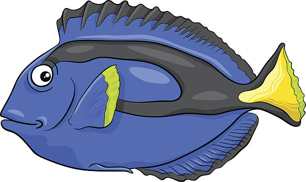 Best Blue Tang Illustrations, Royalty.