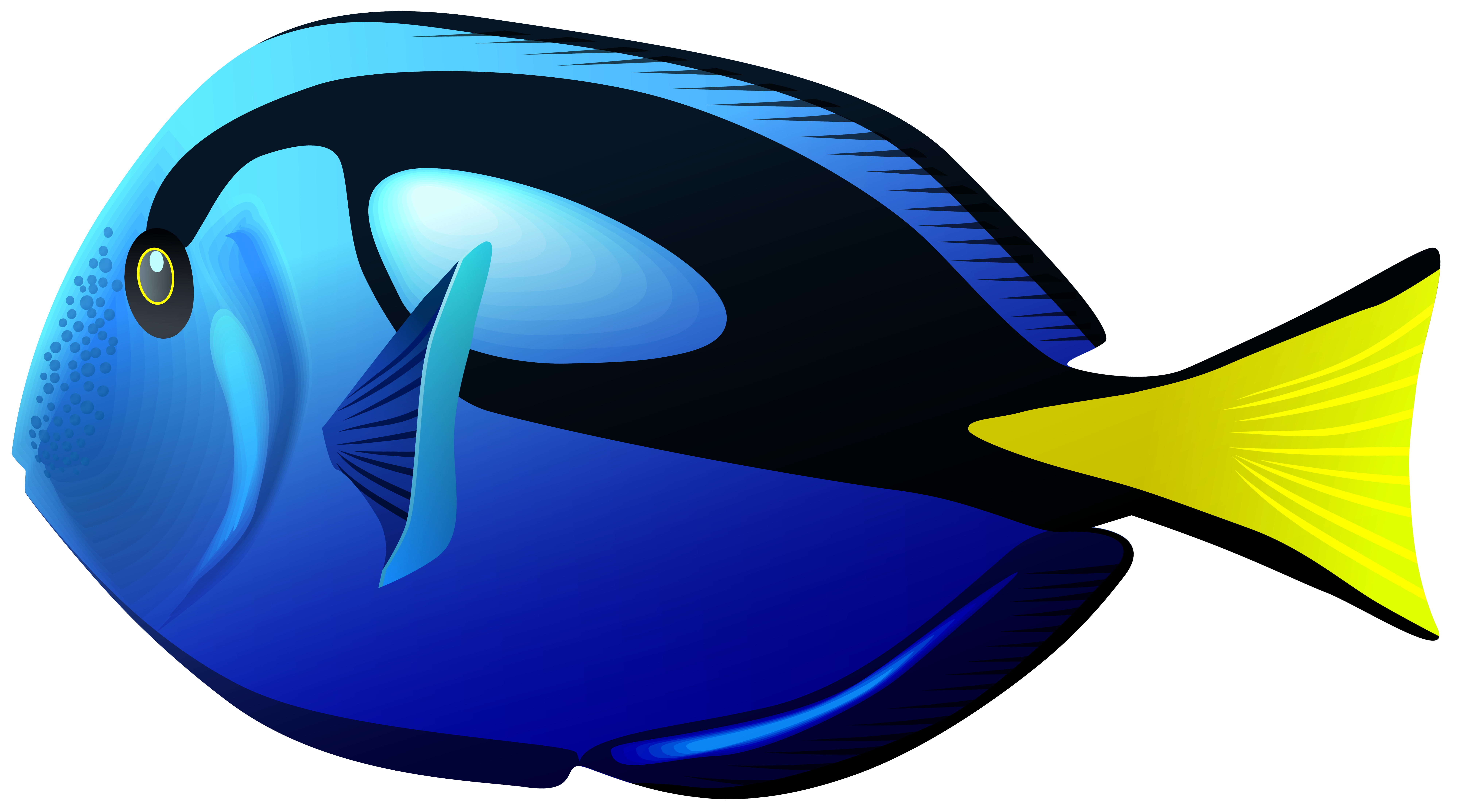 Blue Tang Fish PNG Clipart.