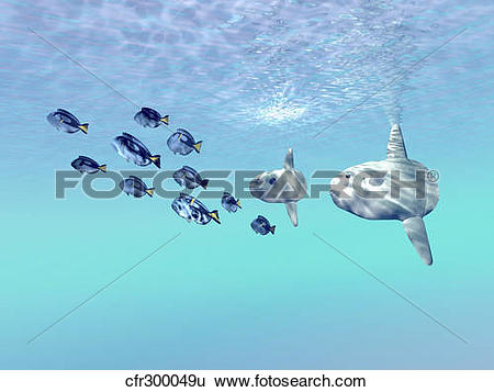 Stock Illustration of Two large sunfish escort a school of Blue.