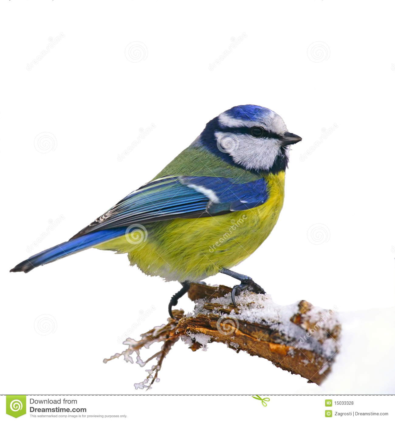 Blue Tit In Winter Royalty Free Stock Photos.