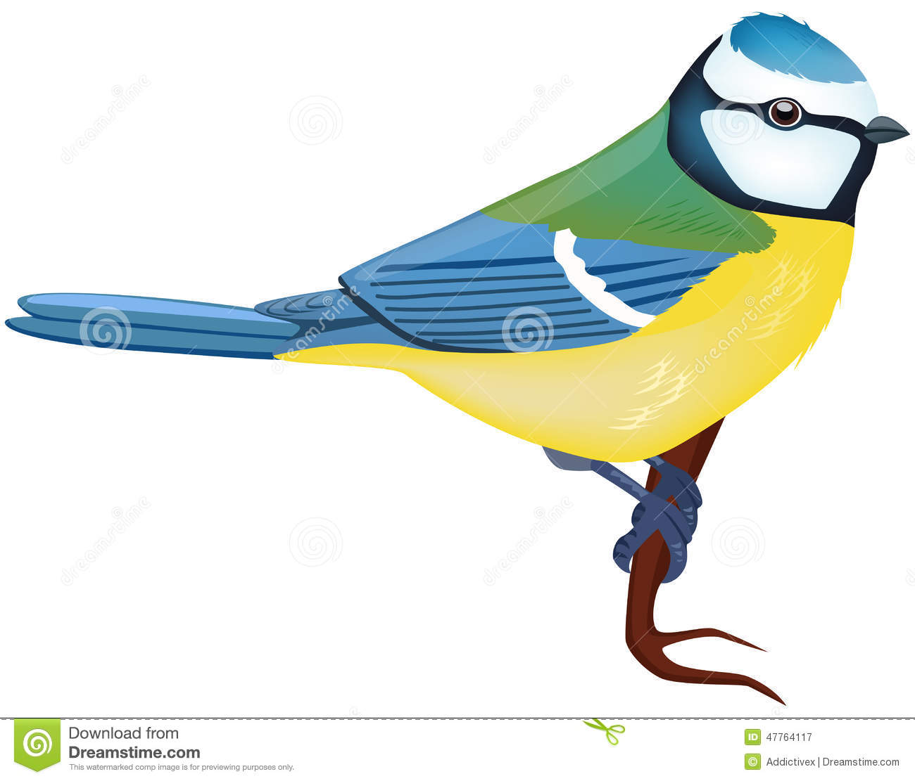 Blue Tit Stock Illustrations.
