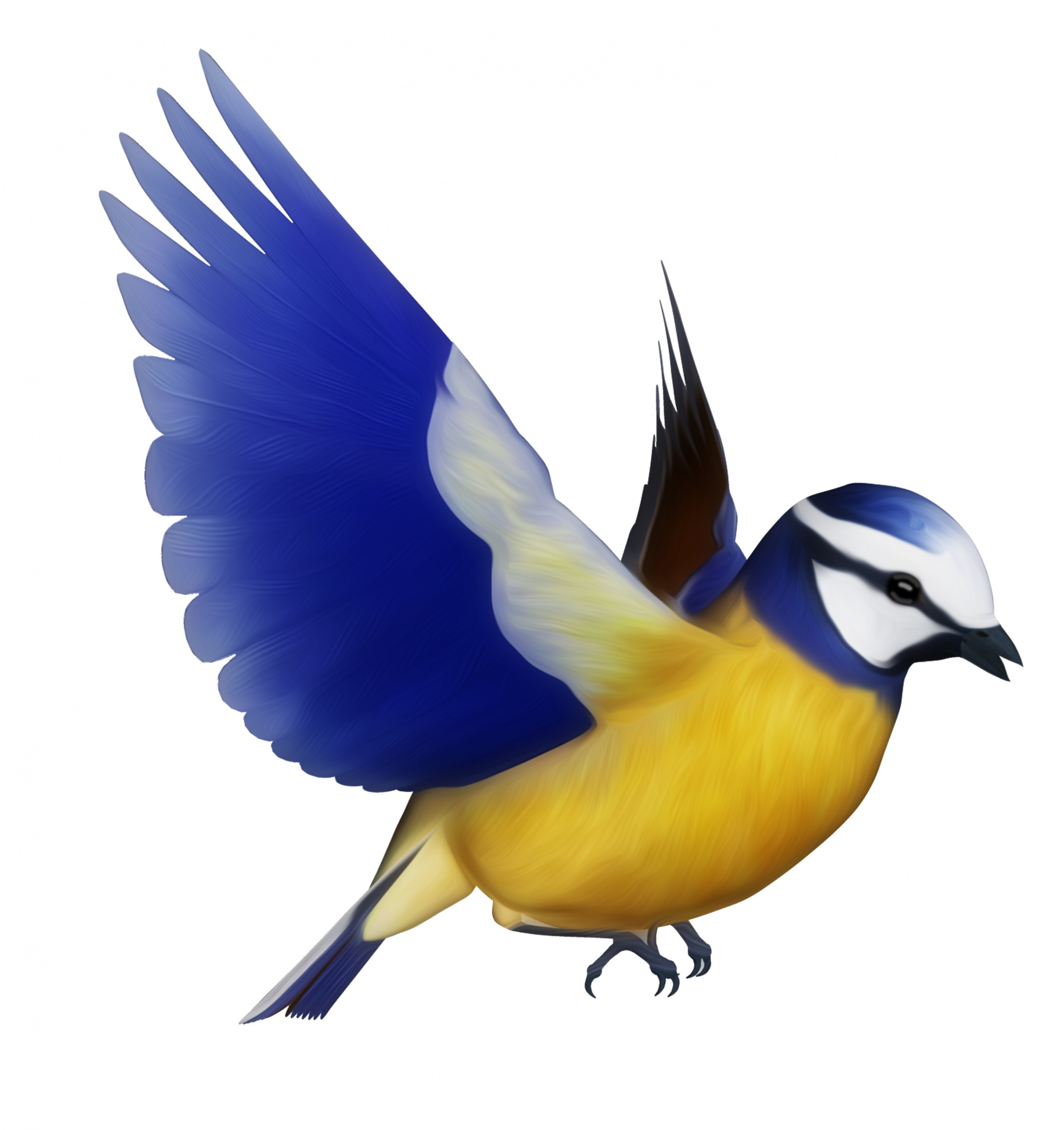 Blue Tit Bird Clipart Free Stock Photo.