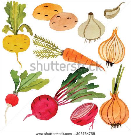 Onion Raster Stock Photos, Royalty.