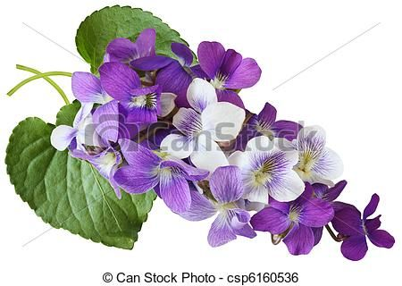 1000+ images about Wild Violets on Pinterest.