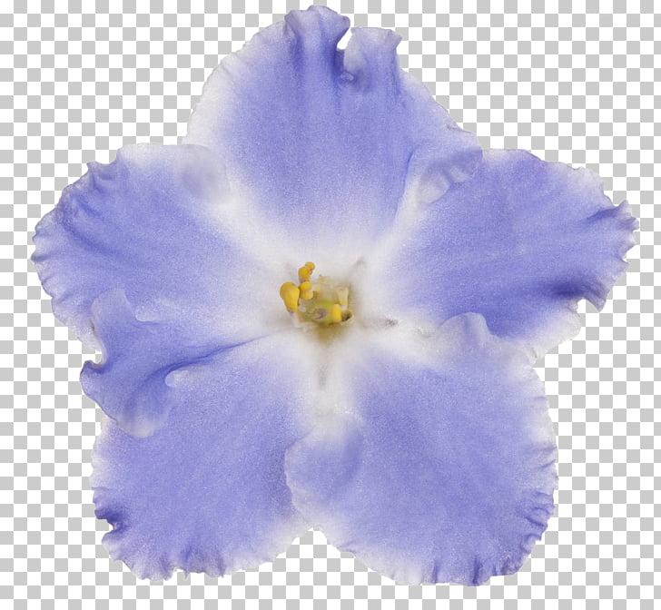 Blue Violet Flower, others PNG clipart.