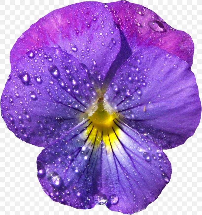 Viola Sororia Viola Cucullata Flower Viola Labradorica Clip.