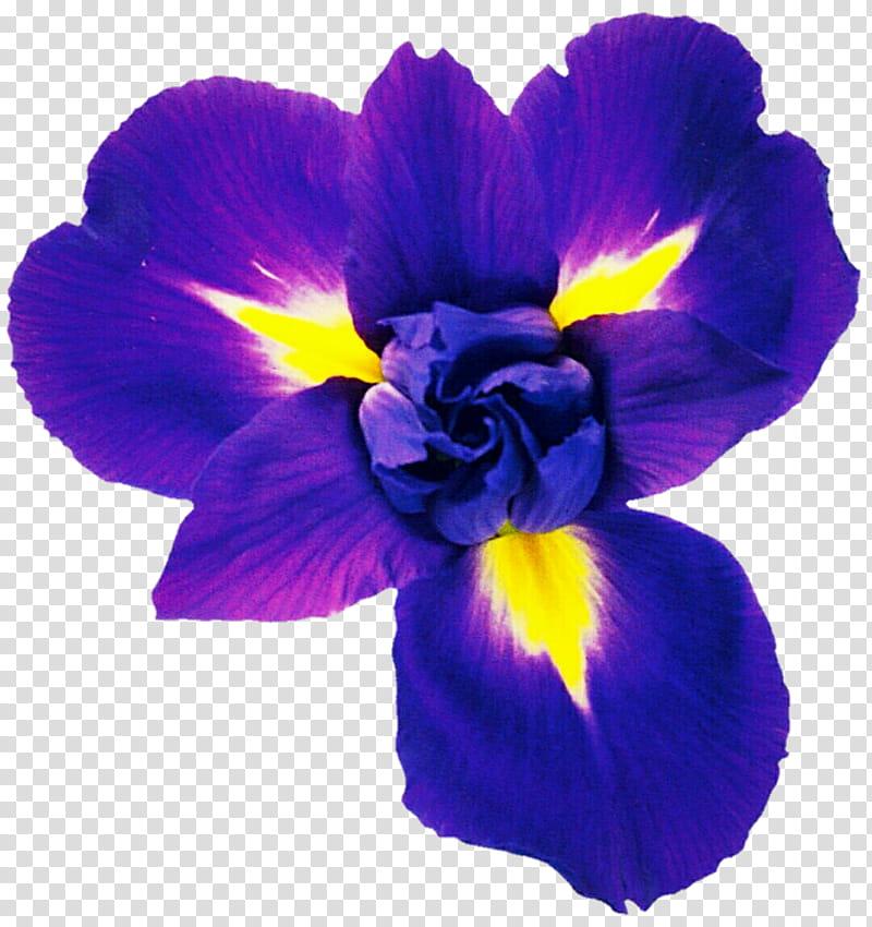 Violet Blue Iris transparent background PNG clipart.