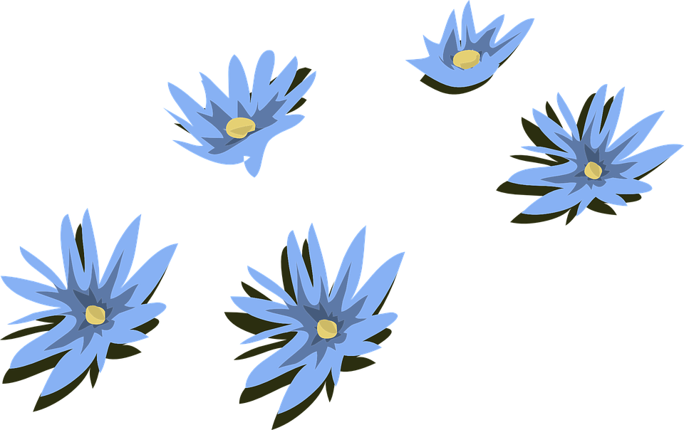 Blue, Water, Lily.