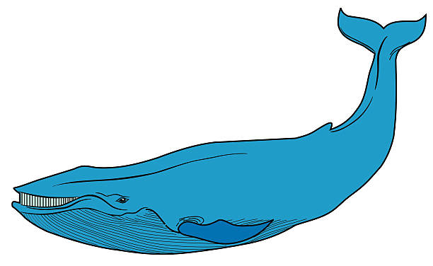 Top 60 Big Blue Whale Vector Illustration Clip Art Graphics Detail.