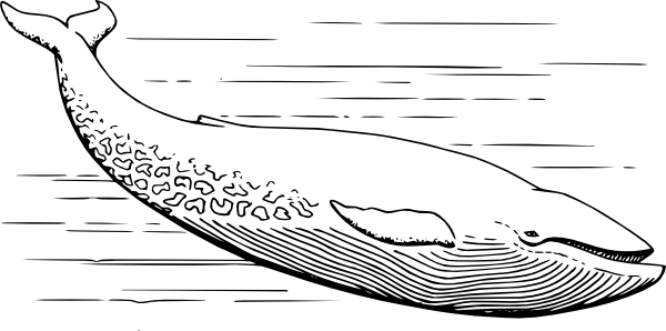 Blue Whale clip art (108022) Free SVG Download / 4 Vector.