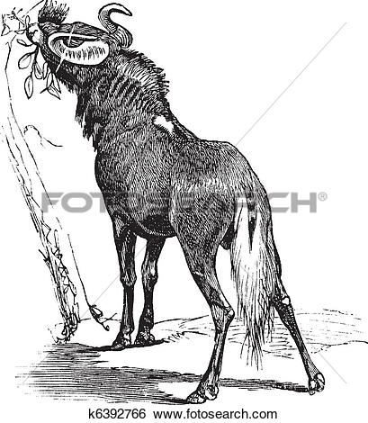 Clip Art of Blue Wildebeest or Connochaetes taurinus vintage.