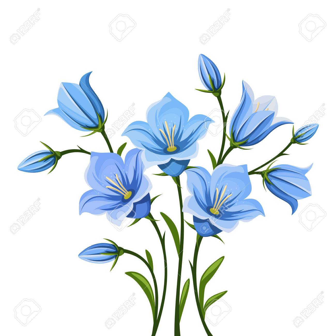 Vector blue bluebell flowers isolated on a white background..
