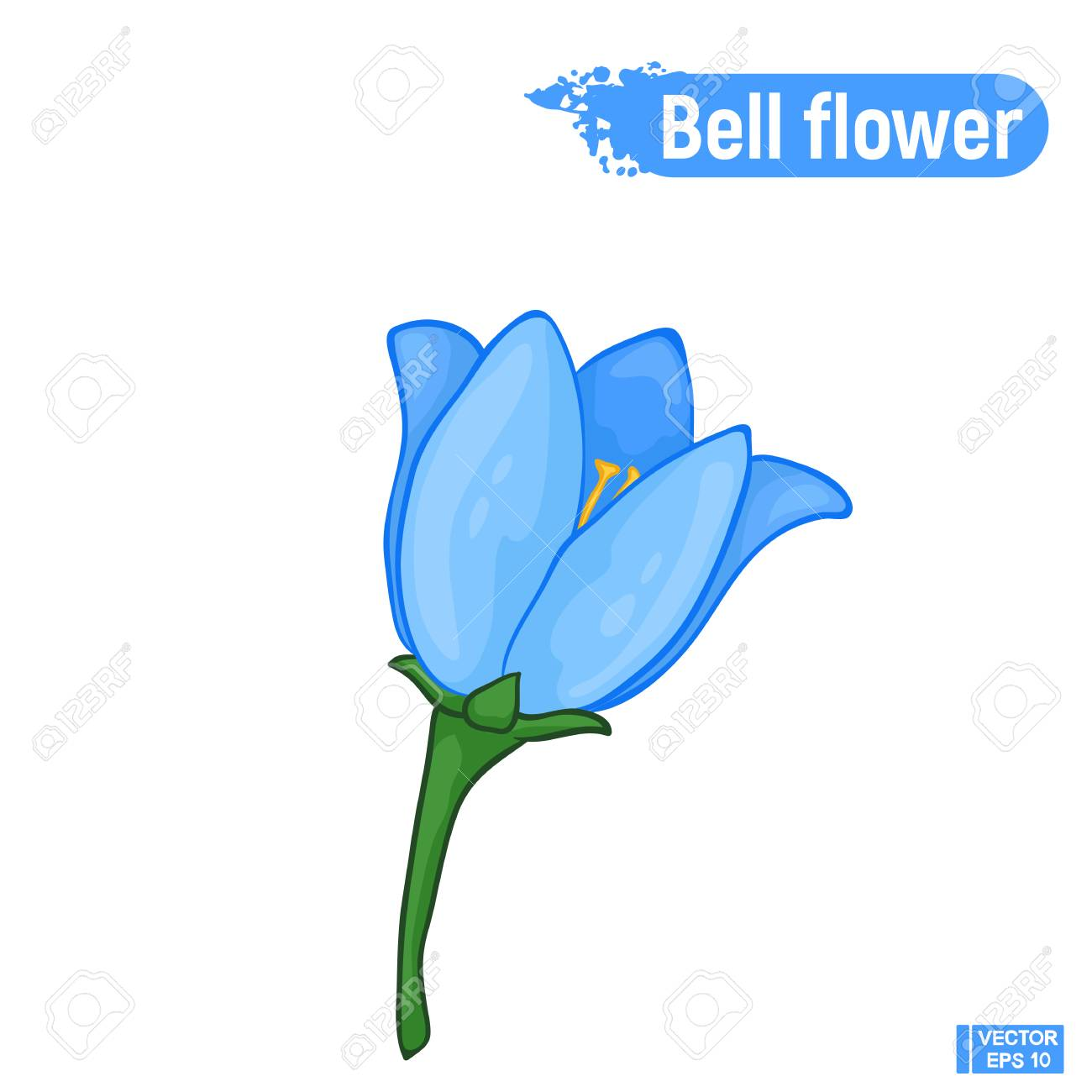 Vector image. Blue bell flower. Colorful sketch of a blossoming...