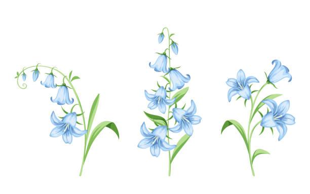 Best Bluebell Illustrations, Royalty.