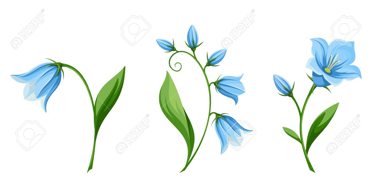 Vector set of blue bluebell flowers isolated on a white background..