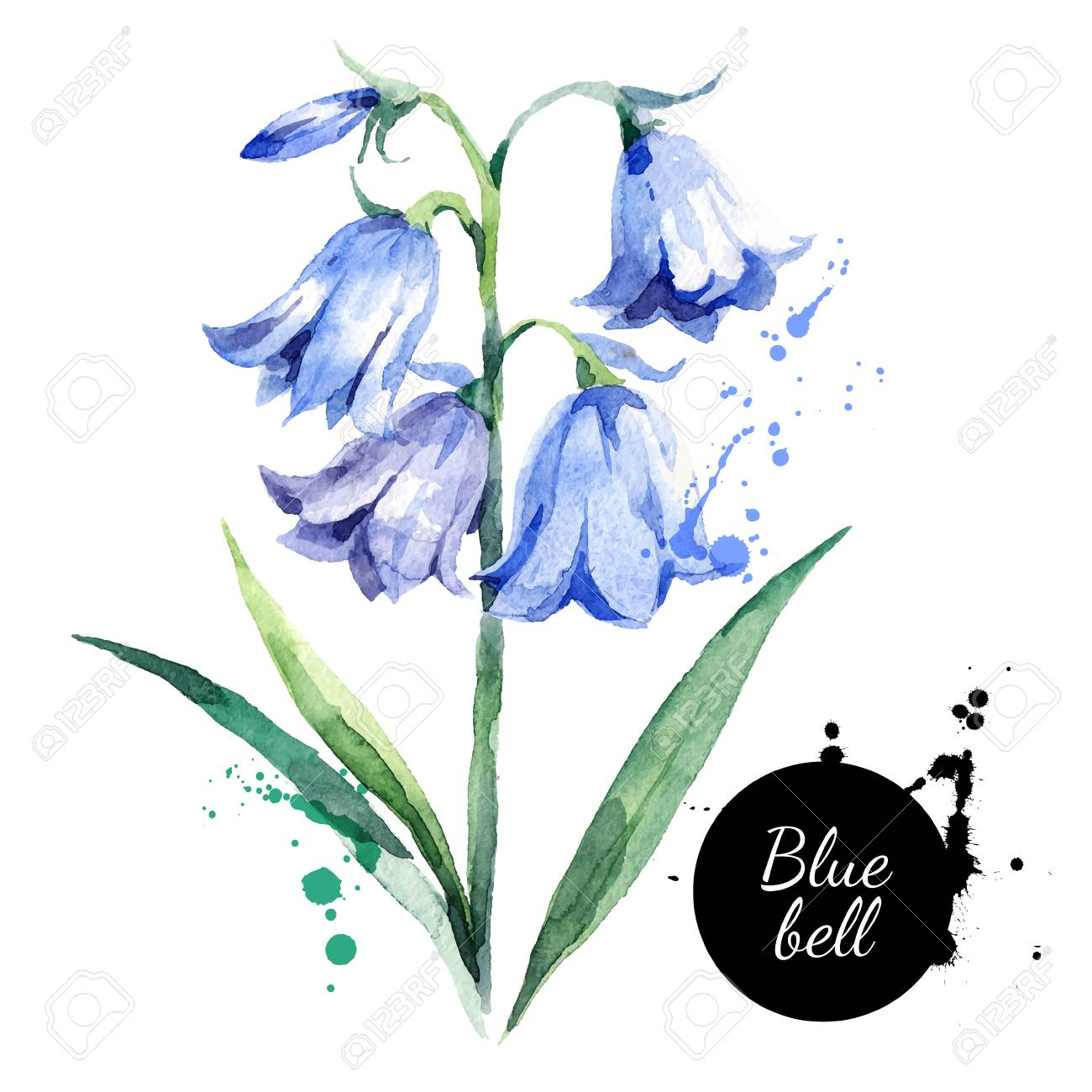 Hand drawn watercolor bluebell flower illustration. Vector painted...