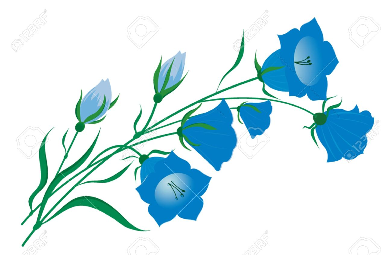 Vector Image Of A Bellflower Royalty Free Cliparts, Vectors, And.