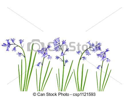 Drawings of Spring Bluebells.