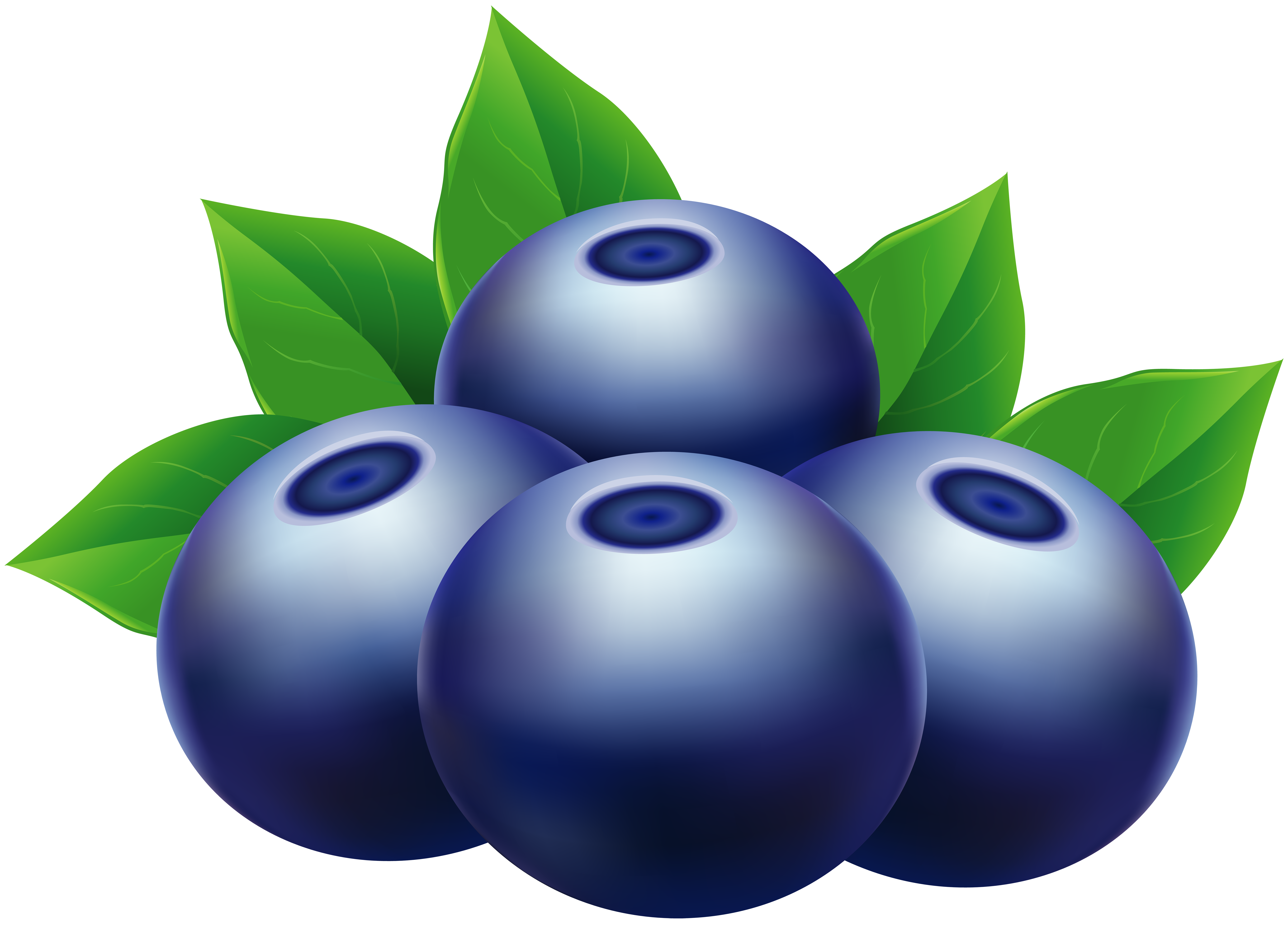 Blueberries PNG Clip Art Image.