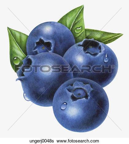Stock Illustration of Blueberries ungerj0048s.