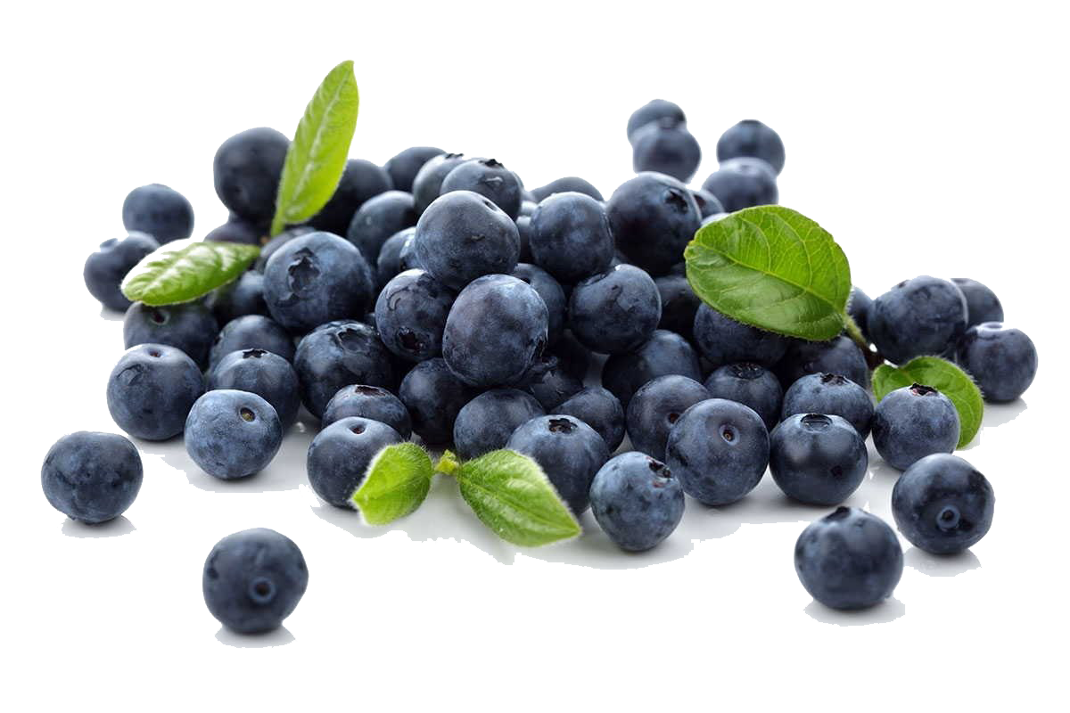 Blueberries PNG Free Download.