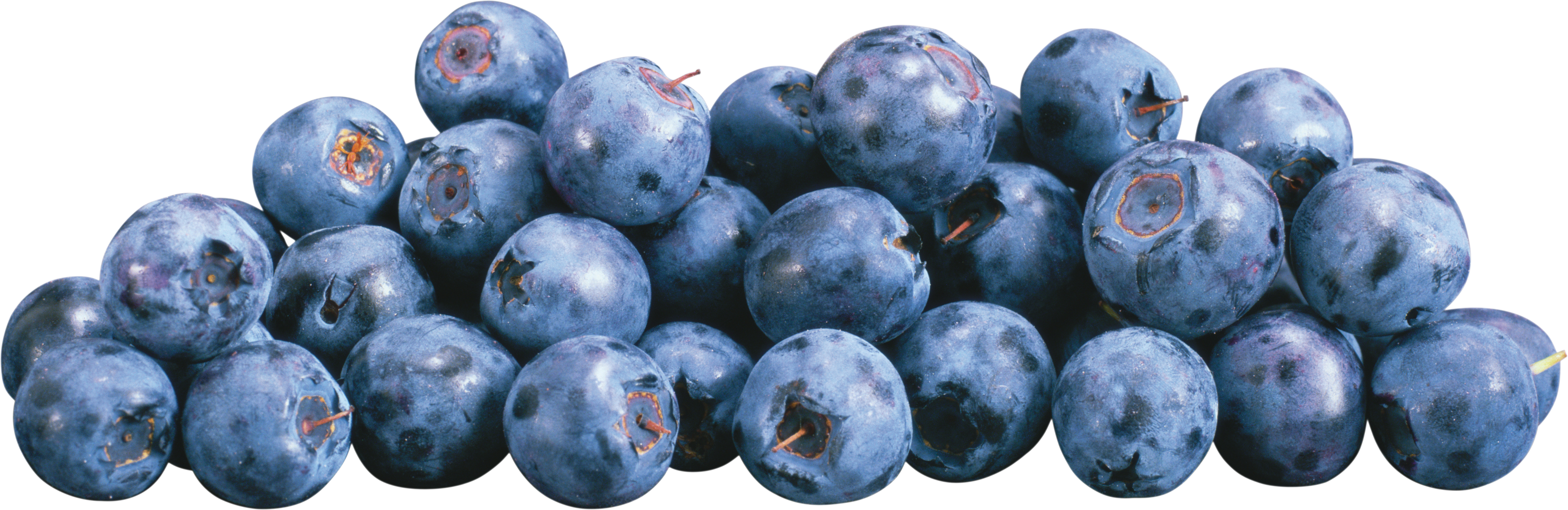 Blueberries PNG images free download.