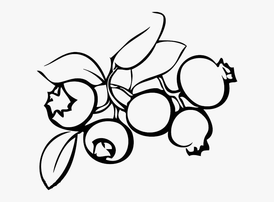 Blueberry Clipart Drawn.