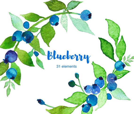 Watercolor blueberry clipart set in 2019.